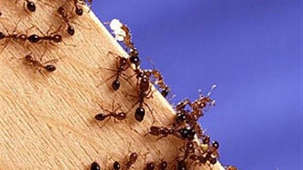 gardez les fourmis hors de votre maison. Black Bedroom Furniture Sets. Home Design Ideas