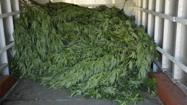 Plantation cannabis exterieur en pot 28 images for Culture de cannabis exterieur
