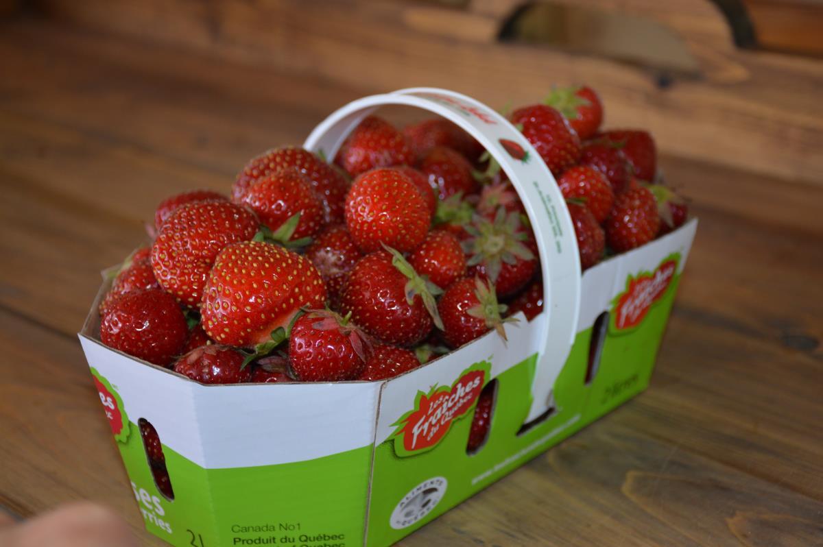 des virus s attaquent aux plants de fraises. Black Bedroom Furniture Sets. Home Design Ideas