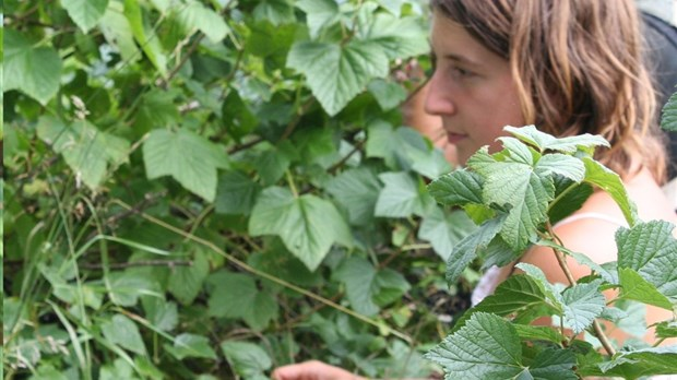 D couvrez les plantes m dicinales lejeune for Plante lacustre
