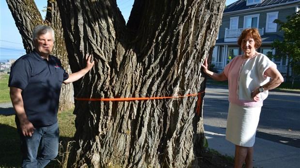 spectaculaire coupe d arbre sur la rue saint pierre. Black Bedroom Furniture Sets. Home Design Ideas